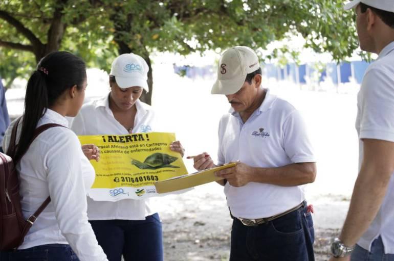 En Castillogrande en Cartagena realizan jornada de sensibilización sobre el caracol africano: En Castillogrande en Cartagena realizan jornada de sensibilización sobre el caracol africano