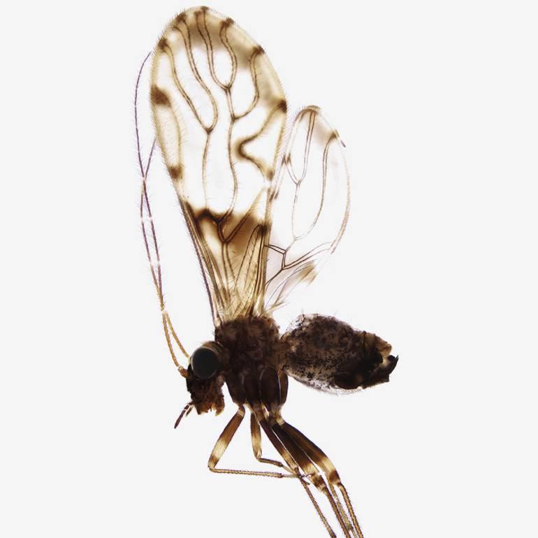 Investigadores de la Universidad del Valle descubren 42 nuevas especies de insectos