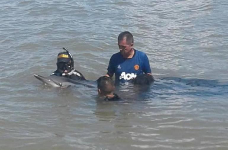 Rescatan delfín desorientado en cercanías a Cartagena: Rescatan delfín desorientado en cercanías a Cartagena