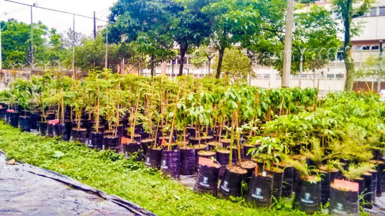 El Cerro Nutibara tendrá un bosque sembrado entre familias