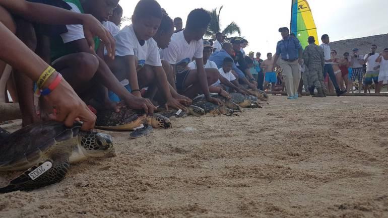 Armada Nacional realizó de liberación de tortugas marinas en Cartagena