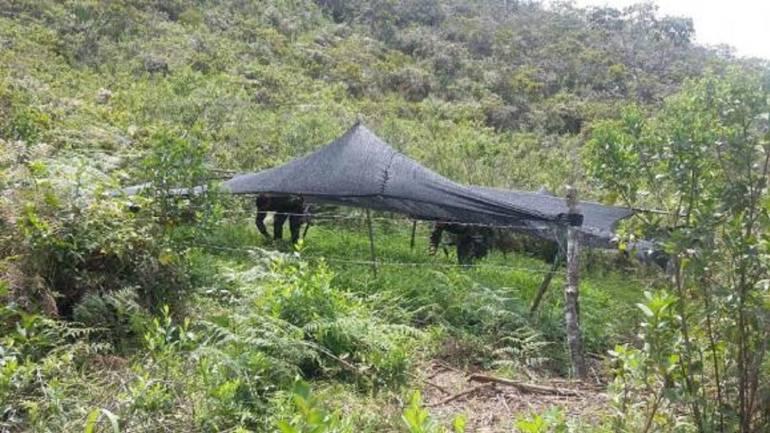 Combates entre grupos ilegales dejan al menos siete muertos en Cauca