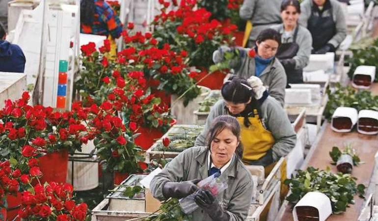 Floricultores de la sabana.