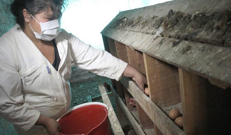 Brote de virus en Cundinamarca prendió las alarmas en Colombia