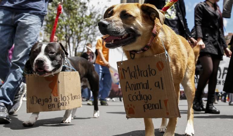Aumentan casos de maltrato animal en el sur del Huila