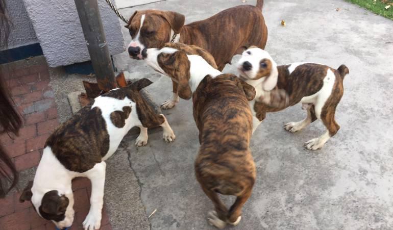 ´Centro de protección animal e Bogotá: Bogotá estrena centro de protección animal