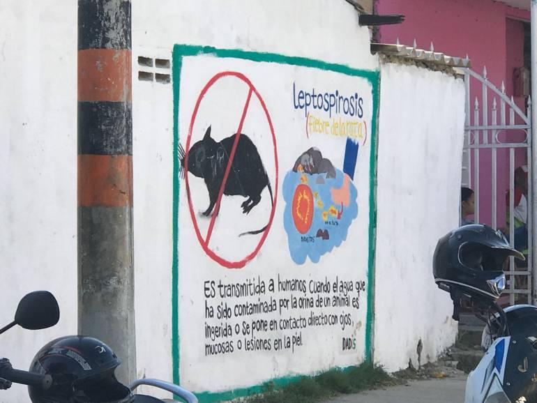 Continúan operativos contra leptospirosis en Cartagena: Continúan operativos contra leptospirosis en Cartagena