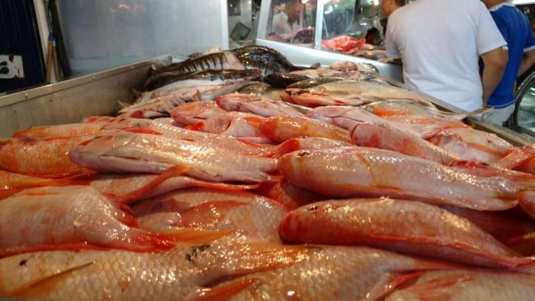 PESCADOS, PECES, CUARESMA, SEMANA SANTA, VIERNES: Recomendaciones para comprar pescado en época de cuaresma