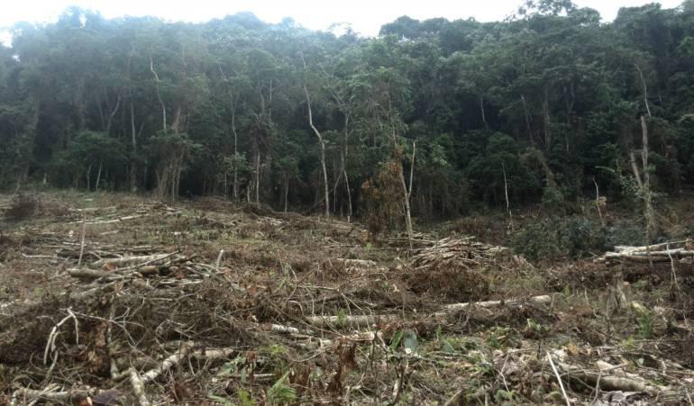 Campesinos rechazan masiva tala de pinos en zona rural de Duitama, Boyacá: Campesinos rechazan masiva tala de pinos en zona rural de Duitama, Boyacá