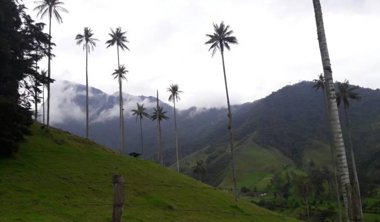 Valle de Cocora en Salento en el departamento del Quindío