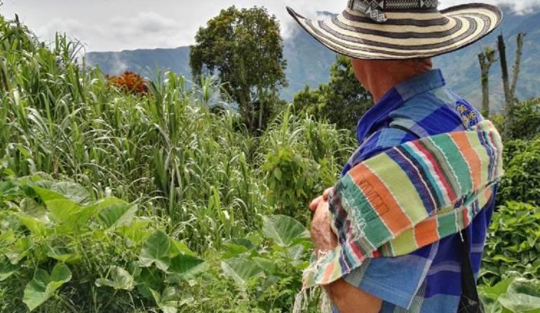 Campesinos volverían a la siembra de coca por incumplimientos del Gobierno