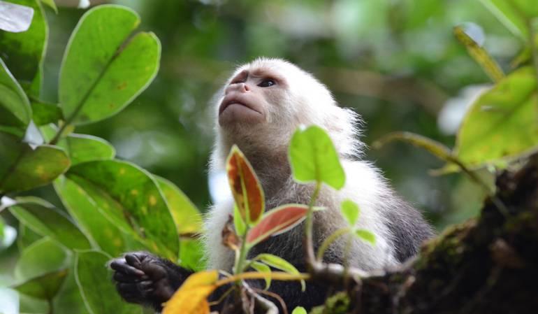 Imagen de archivo de Wild Colombia de Natgeo, un documental sobre la biodiversidad en Colombia.