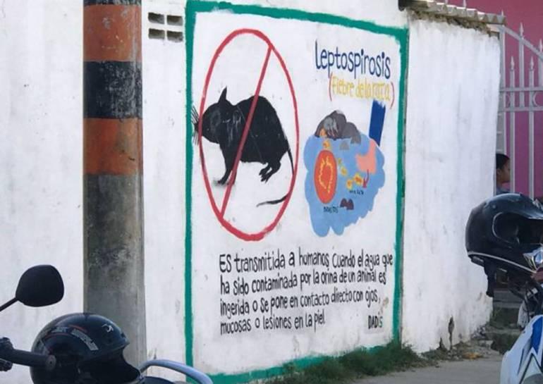 Concejo de Cartagena pide informe sobre acciones contra leptospirosis: Concejo de Cartagena pide informe sobre acciones contra leptospirosis