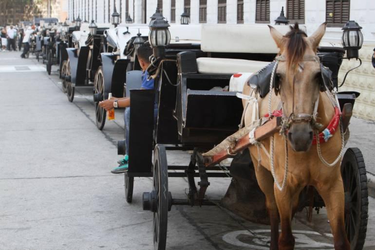 En el Centro Histórico de Cartagena caballo cochero mordió a una mujer