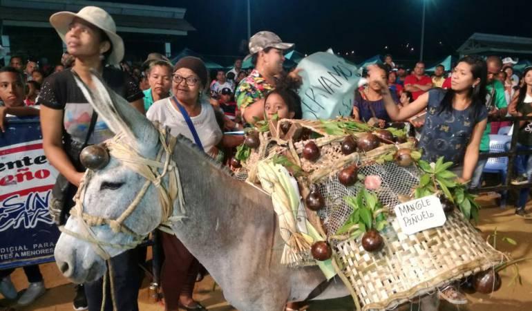 Festival de San Antero: Un burro ambientalista ganó el Festival de San Antero