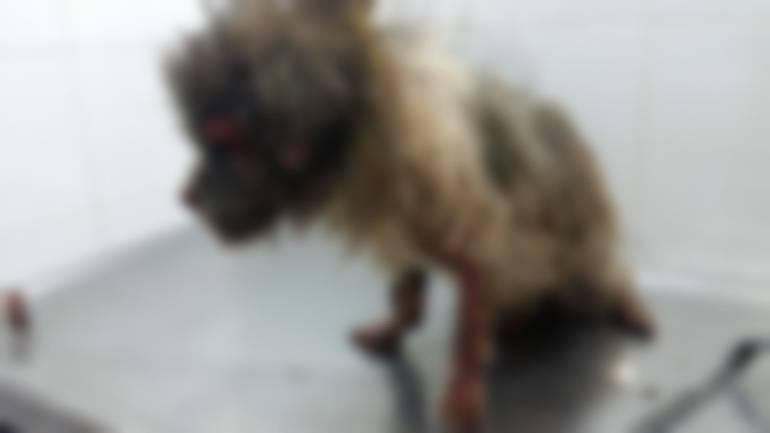 Murió un perro por baño con agua hirviendo en Cartagena: Murió un perro por baño con agua hirviendo en Cartagena