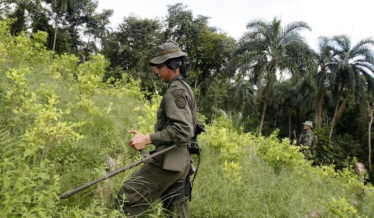 zonas libres de minas: Tolima tiene nuevas zonas libres de minas antipersonas