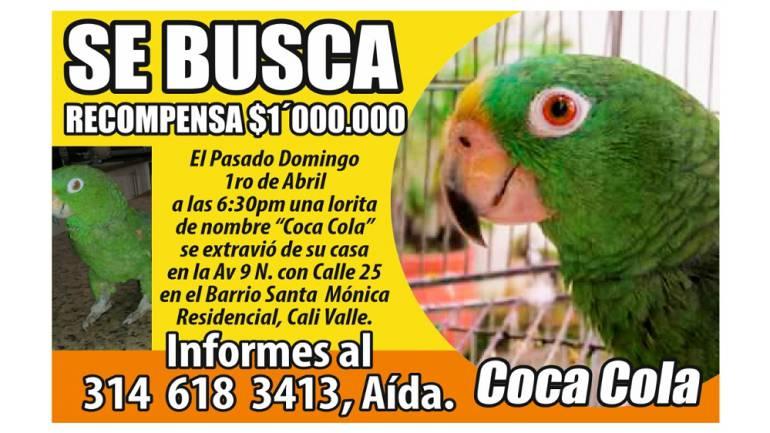 Millonaria recompensa por lora desaparecida: Un millón de pesos ofrecen en Cali por una lora que se perdió
