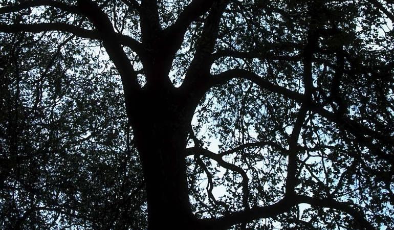 """Intervención en Bosque: Autoridad ambiental prende """"alarmas"""" por intervención al bosque Galilea"""