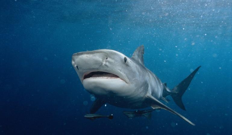 Tiburones en San Andrés: Avistamiento de tiburones en San Andrés