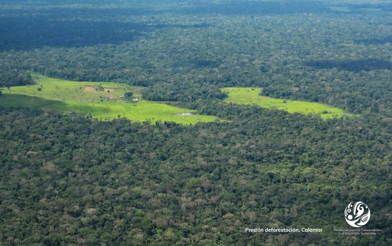 SANTANDER DESFORESTACIÓN BOSQUES NATIVOS TALAS: Tala indiscriminada acabó con 225 mil hectáreas de bosque