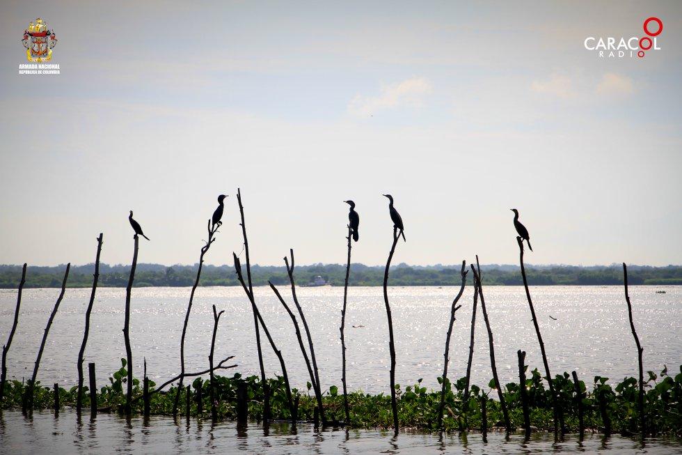 Gran cantidad de especies conviven en el Parque Isla Salamanca