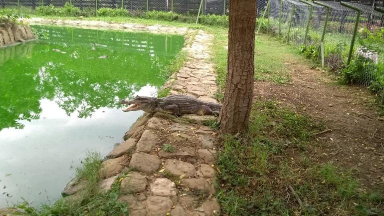 En este lugar se encuentra una cantidad notable de invertebrados, anfibios, reptiles y peces.