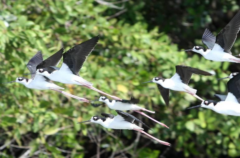 Viaje al corazón del Caribe: Con 800 especies el Cesar le apunta al avistamiento de aves