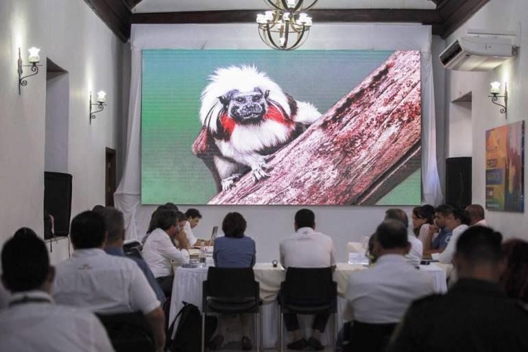 Plan de protección ambiental y animal ampliacion aeropuerto cartagena: Nuevo aeropuerto de Cartagena no afectará hábitat de mono tití cabeciblanco