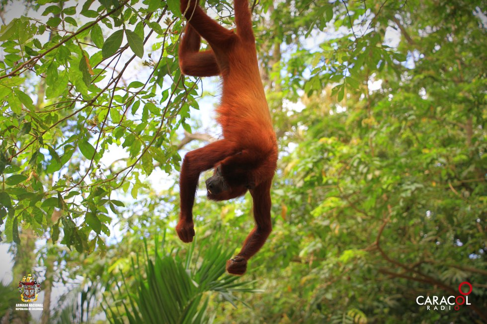 En el Parque la Ronda del Sinú hay varios tipos de animales.