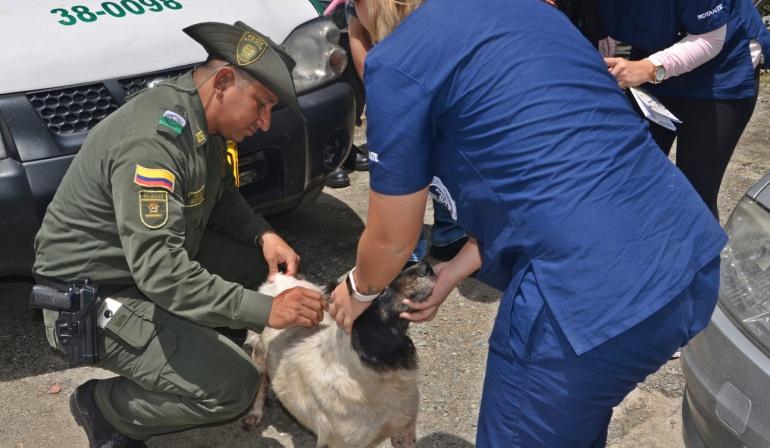 Emergencia Hidroituango: Policía inicia plan de rescate de animales abandonados en Puerto Valdivia