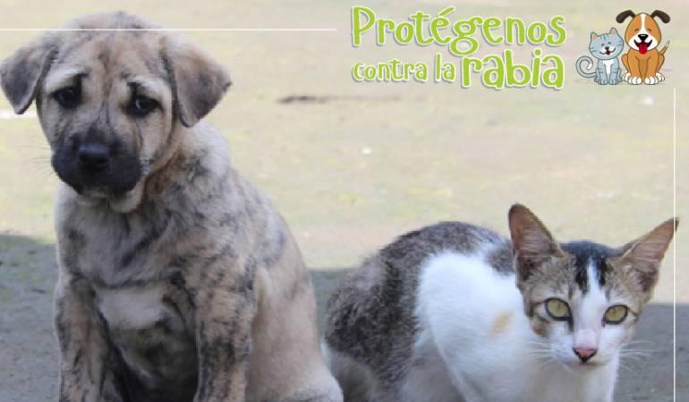 Este domingo jornada gratuita de vacunación de perros y gatos en Bogotá