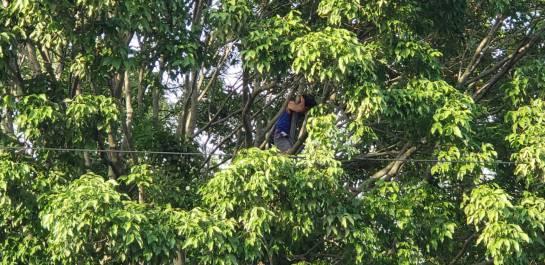 BUCARAMANGA CONTROVERSIA TALA ÁRBOLES NORMAL SUPERIOR: Universitario permanece en un árbol para evitar tala en la Normal