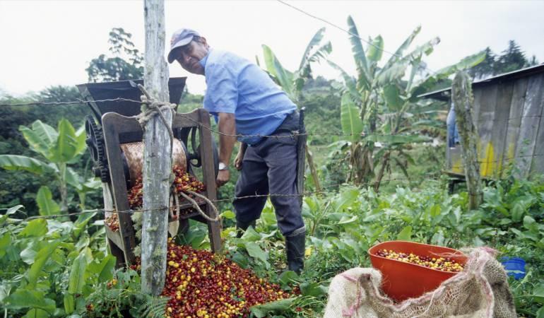 """Año critico para la caficultura en Risaralda: """"Este año todo está negativo para el café"""""""