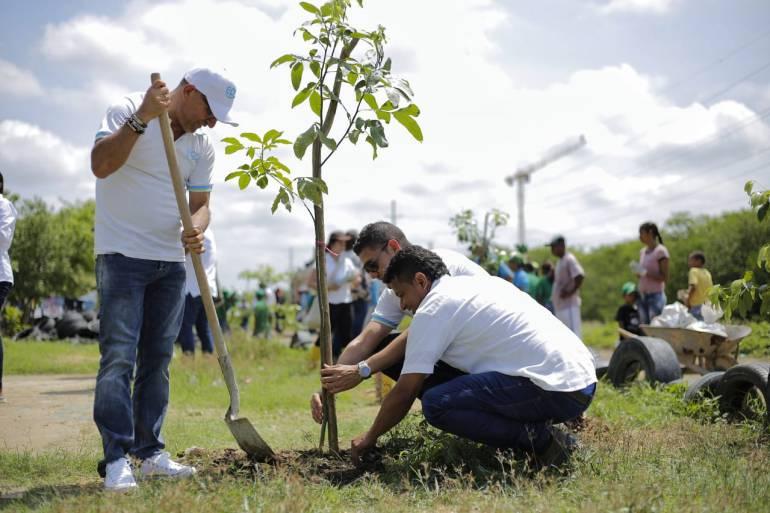 """""""Siembratón"""" en Cartagena le dejó más de 1.000 árboles nuevos a la ciudad"""