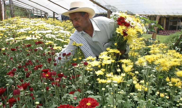 Floricultura Cundinamarca: Gobierno y sector floricultor emprenden proyecto de innovación en cultivos