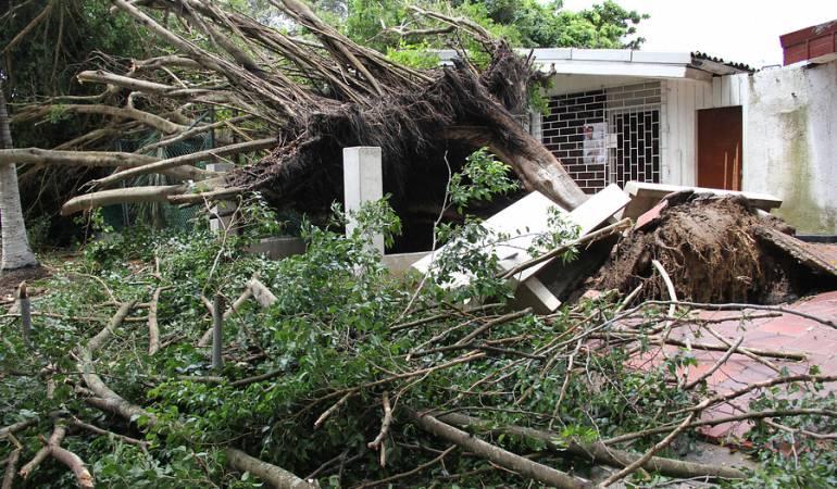 Árboles Caídos: En promedio se caen cuatro árboles diarios en Bogotá durante el invierno