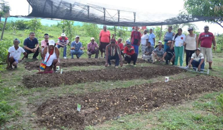 Arjona, Bolívar, Cultivos: Patios productivos para adultos mayores en Arjona Bolívar