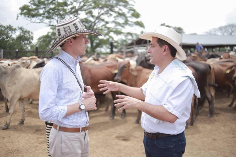 Gobernación de Bolívar y DNP entregan ganado en los Montes de María: Gobernación de Bolívar y DNP entregan ganado en los Montes de María
