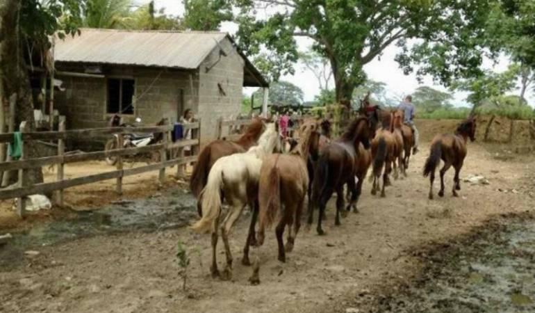 Salud, Bolívar, Vacunación, Animales: Jornada de vacunación contra encefalitis equina en Bolívar