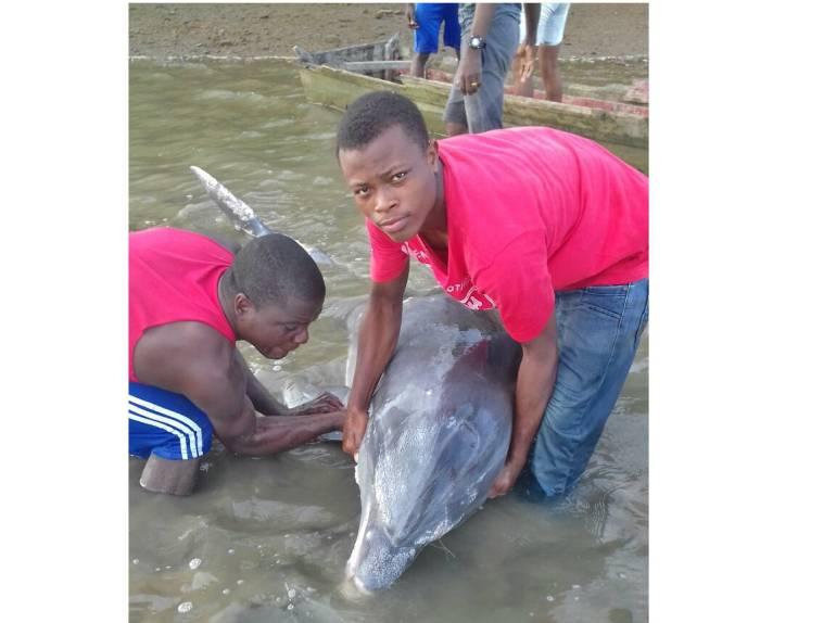 Delfín fue encontrado agónico en Buenaventura, Valle del Cauca: En el Pacífico vallecaucano luchan por salvarle la vida a un agónico delfín
