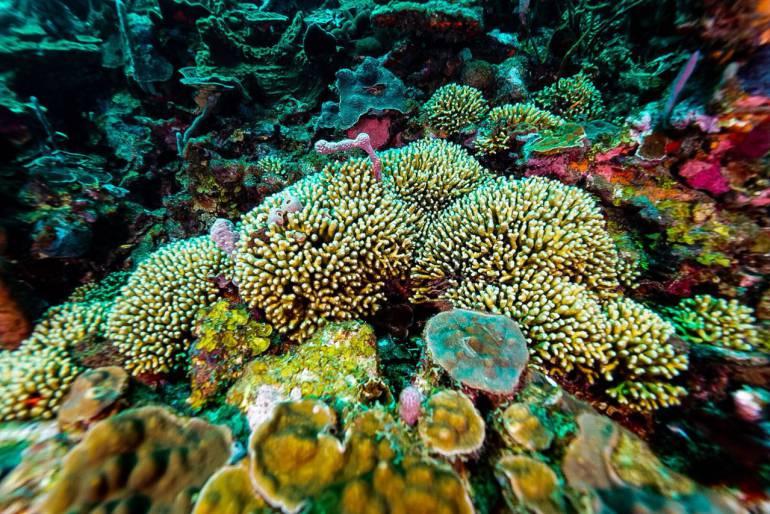 Cuidado medioambiental en Cartagena: Agencia de Tierras le pone freno al daño coralino en Islas del Rosario