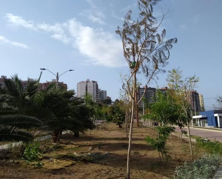 Árboles sembrados: Siembran más de 5.000 árboles en los Juegos Centroamericanos
