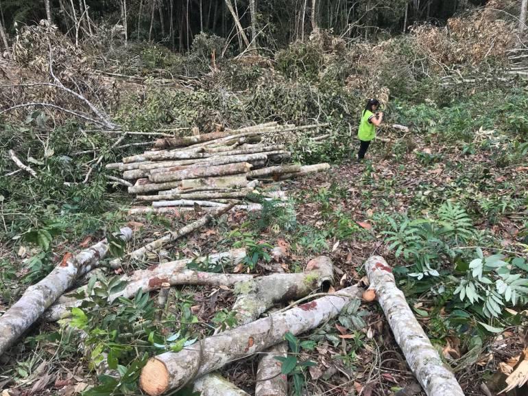 BUCARAMANGA DAÑOS AMBIENTAL TALA DE ÁRBOLES EN LA MESA DE LOS SANTOS: Otro daño ambiental: talaron árboles en la Mesa de los Santos