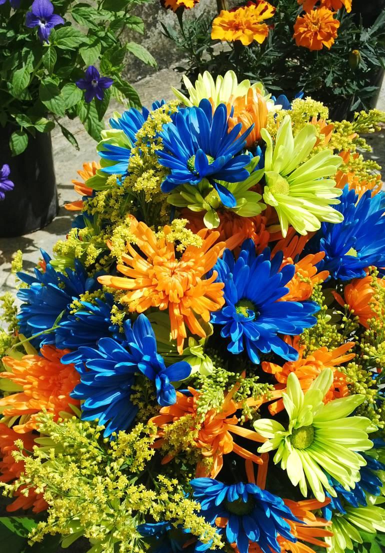 silleteros, parque arví, flores: 100 mil tallos florales entregaron a silleteros en el Parque Comfama Arví