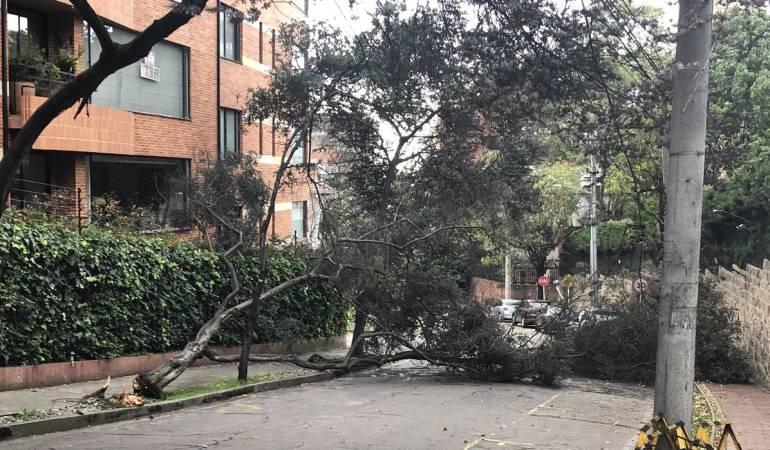 Fuertes vientos en Bogotá tumbaron por lo menos 35 árboles