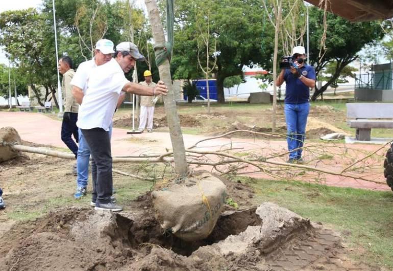 Siembra de árboles: Sembrar 30.000 árboles: la apuesta sostenible en Barranquilla