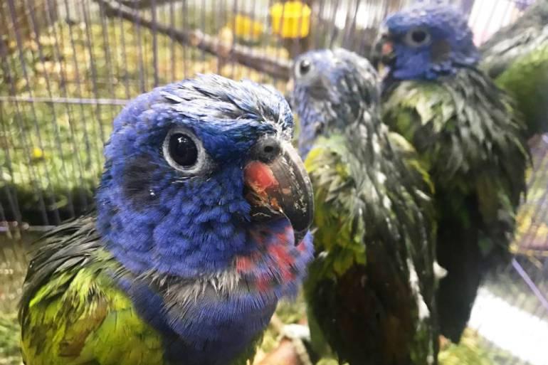 Maltrato animal: 103 aves rescatadas fueron llevadas al Aviario de Barú en Cartagena