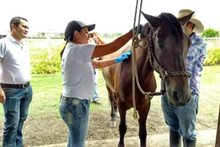 Bloqueo preventivo de algunos municipios de Bolívar por influenza equina: Bloqueo preventivo de algunos municipios de Bolívar por influenza equina