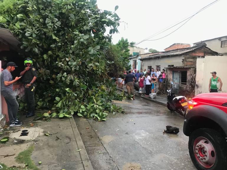 Lluvias dejaron árboles, postes caídos y viviendas destechadas en Cartagena: Lluvias dejaron árboles, postes caídos y viviendas destechadas en Cartagena